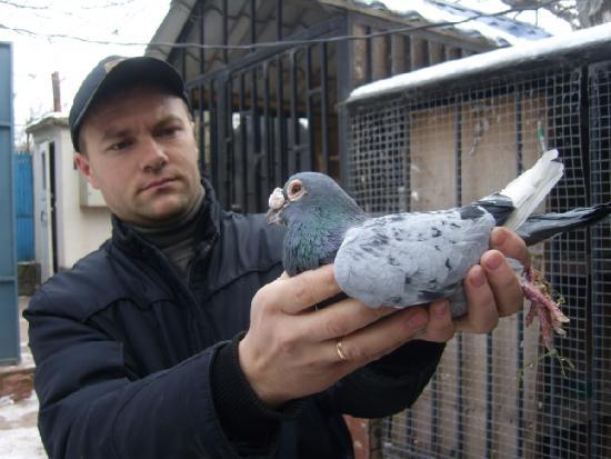 Porumbel de 19 ani. Avind zburate 4 Moscove 1105km.